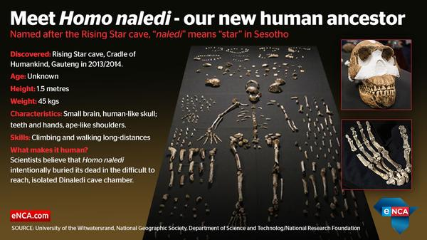 Homo naledi - New species of human ancestor discovered in South Africa