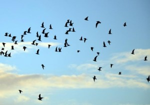 Birds of 11 rare species found in Jharkhand