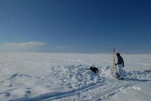 High sediment mercury levels reported in Arctic region