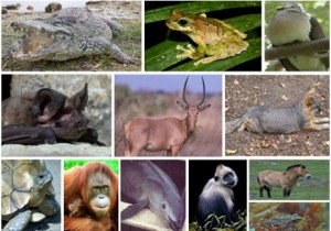 More than 50 animal species critically endangered