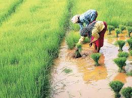 Mizoram, JICA sign pact for promoting sustainable agriculture