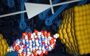 Researchers made the smallest diode using a DNA molecule