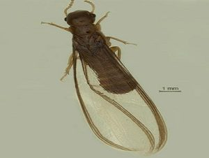 New termite species spotted in Malabar Wildlife Sanctuary