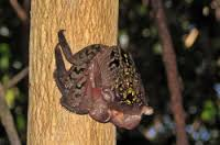 New tree-living crab species found in Kerala
