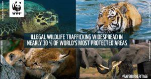 Wildlife trafficking threatens 30% world natural Heritage Sites WWF