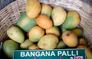 Andhra Pradesh's Banganapalle mango gets GI tag