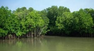 Sundarbans mangrove cover at risk says Study