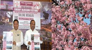 India International Cherry Blossom Festival to be held in Shillong