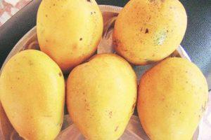 Banaganapalle mangoes, six others get GI tag