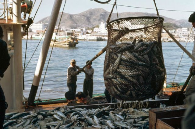 Centre bans artificial lights in mechanised fishing vessels