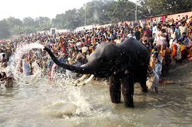 Sonepur cattle fair, Asia's largest, begins in Bihar