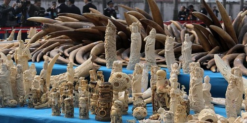 China shuts down its Legal Ivory Trade