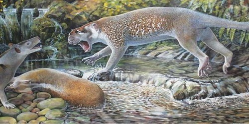 New species of extinct lion discovered in Australia