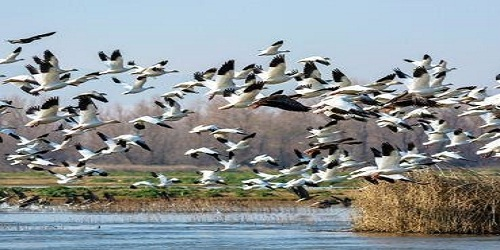 International Bird Festival to be held at Dudhwa National Park