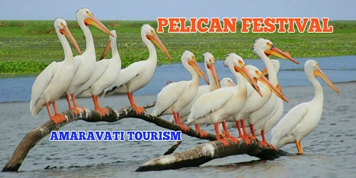 First-ever Pelican Bird Festival held at Atapaka Bird Sanctuary