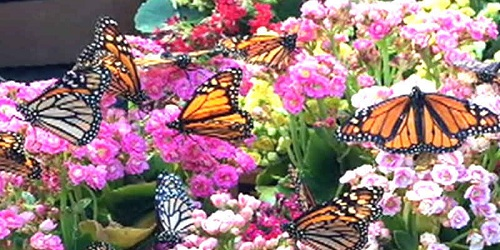 Uttar Pradesh gets its first butterfly park in Kanpur