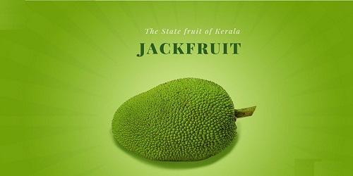 Jackfruit declared as Kerala's official fruit