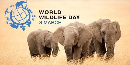World Wild Life Day