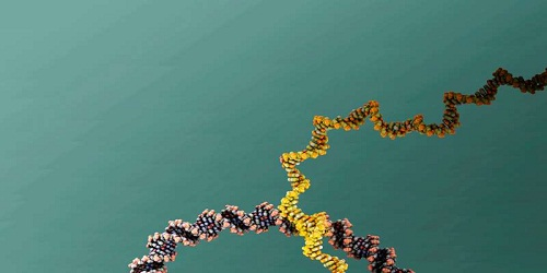 Tiny DNA unicycle successfully completes test drive