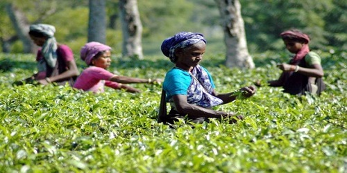 Indian tea industry records highest ever production, export in FY18