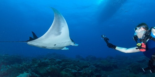 World's first known manta ray nursery discovered