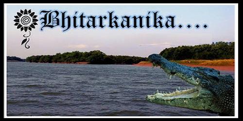 Bhitarkanika national park has become the largest habitat of the endangered estuarine crocodiles in India