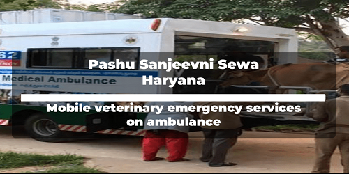 'Pashu Sanjeevni Sewa': livestock veterinary scheme introduced by Haryana government
