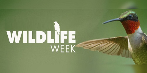 Wild Life Week celebrations conclude at Delhi National Zoological Park