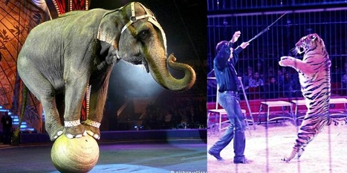 Centre proposes ban on use of animals in circuses, performances