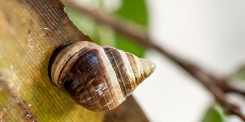 Death of George the tree snail marked the first extinction of 2019 O