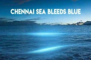 Blue Waves At Chennai Beaches bad for fishes