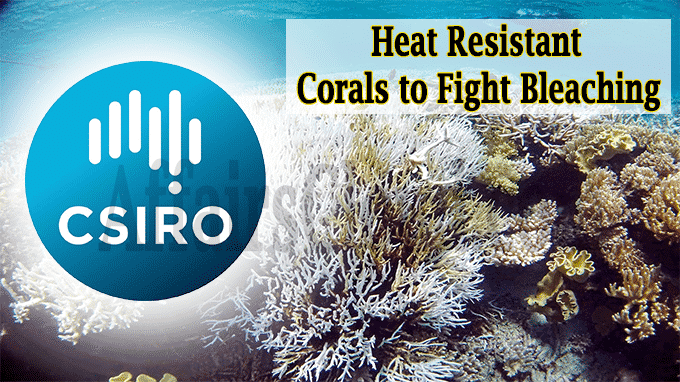 Heat resistant corals to fight bleaching