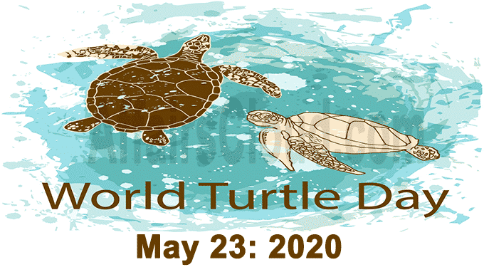 World Turtle Day 23 2020