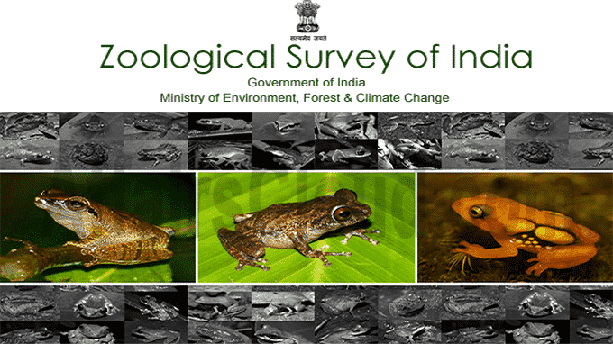 ZSI lists 20 species of amphibians