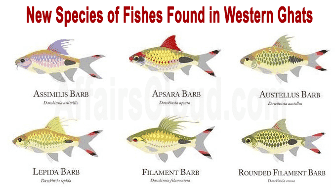 new species of fishes found in Western Ghats