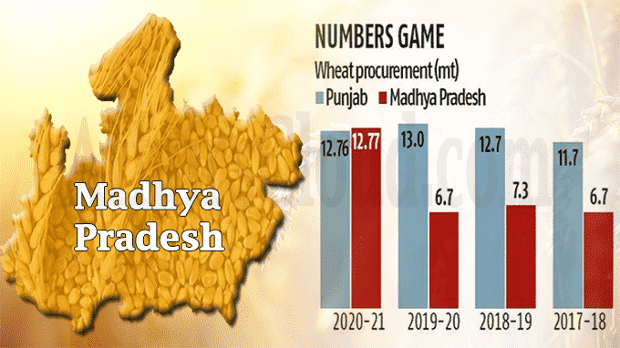 MP becomes country's top wheat procurer