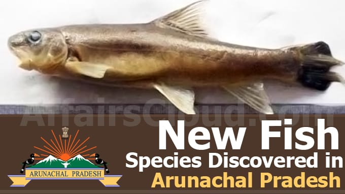 New-fish-species-discovered-in-Arunachal-Pradesh