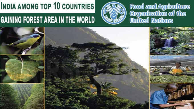 India among top 10 countries gaining forest area in the world