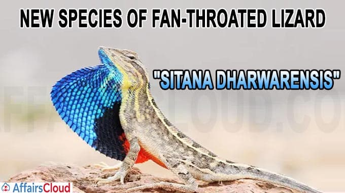 New species of fan-throated lizard Sitana dharwarensis