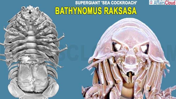 Researchers Find Supergiant 'Sea Cockroach' named 'Bathynomus Raksasa'