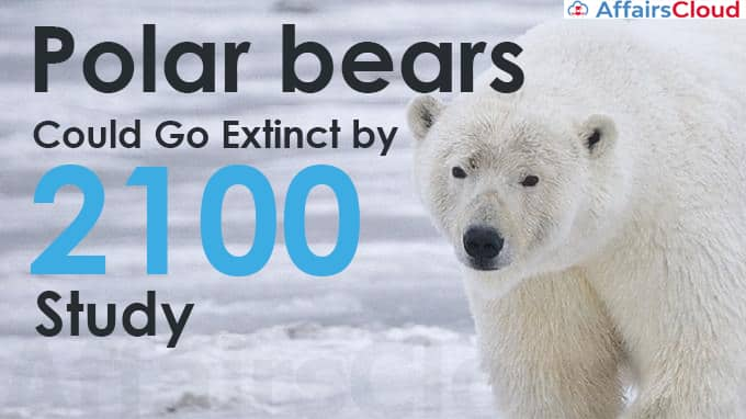 Polar-bears-could-go-extinct-by-2100-Study