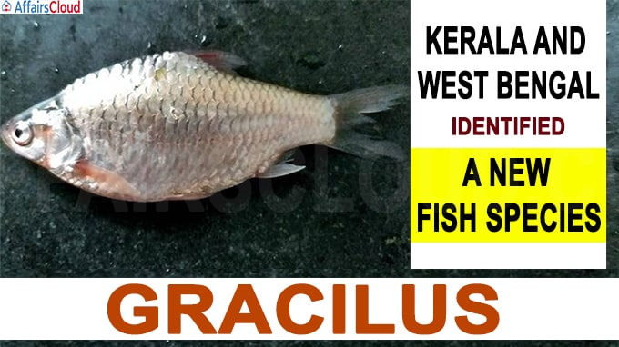 Kerala and West Bengal identified a new fish species Gracilus