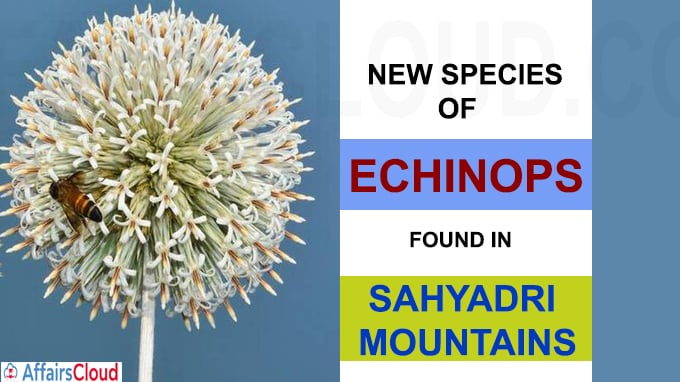 New species of Echinops found in Sahyadri mountains
