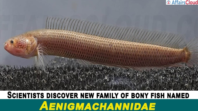 Scientists discover new family of bony fish named Aenigmachannidae in western ghats