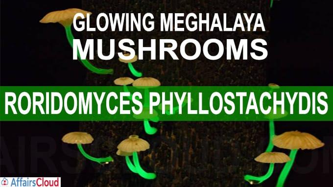 Mystery of Meghalaya's glowing mushroom