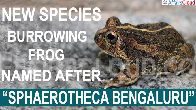 New species of burrowing frog named after Bengaluru
