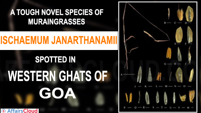 Novel species of Muraingrasses spotted in Western Ghats of Goa