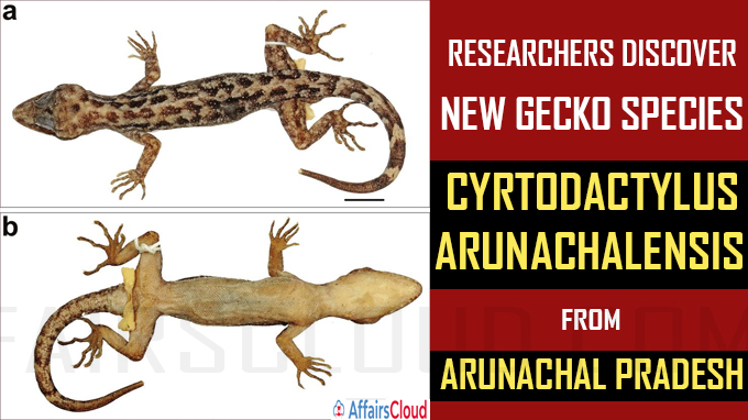 Researchers discover new gecko species from Arunachal Pradesh