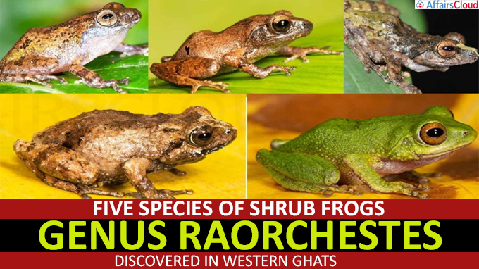 Five species of shrub frogs discovered