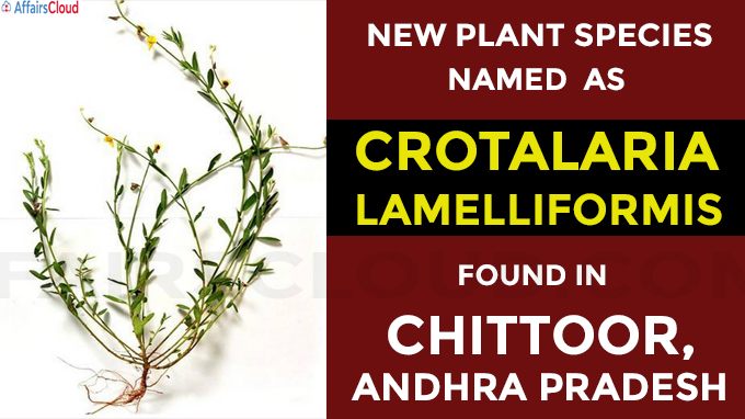 New plant species named as Crotalaria lamelliformis found in Chittoo